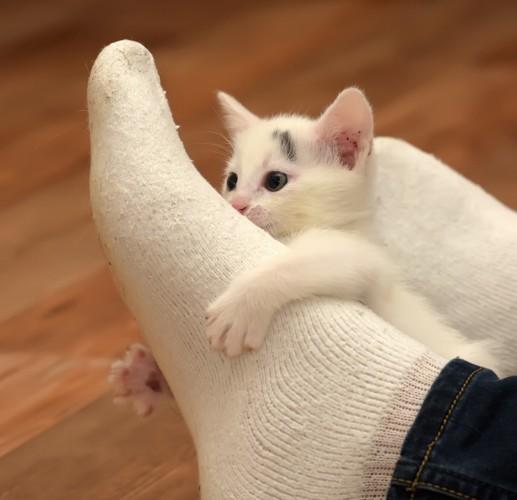 足にしゃがみつく猫
