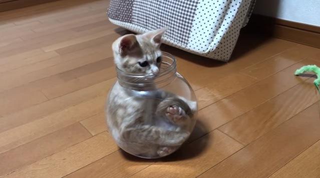 瓶から顔を出す猫