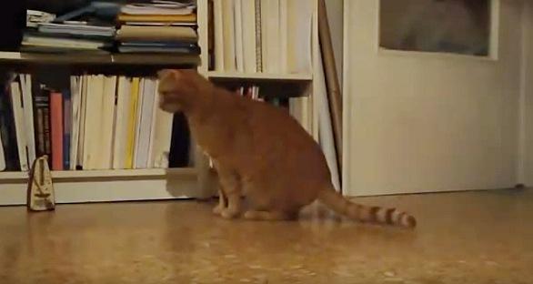 メトロノームに合わせて動く猫