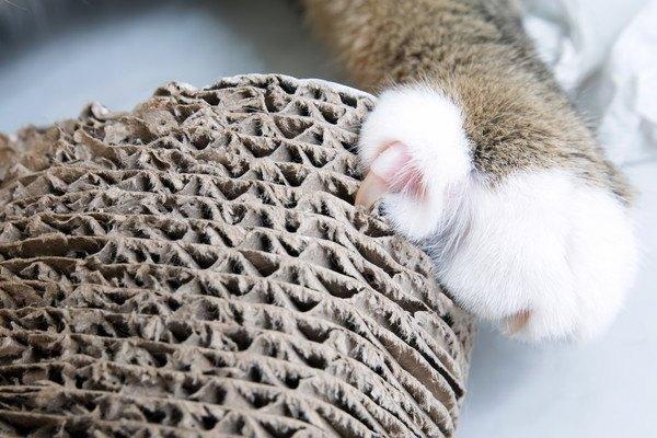 ダンボールの爪とぎと爪をとぐ猫の手