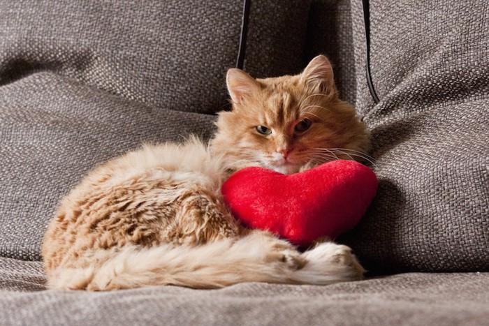 ハートのクッションとソファーでくつろぐ猫