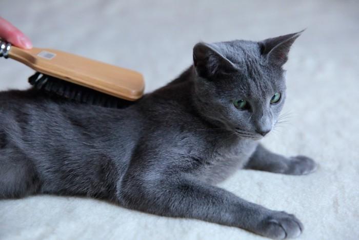 獣毛ブラシでブラッシングされている猫