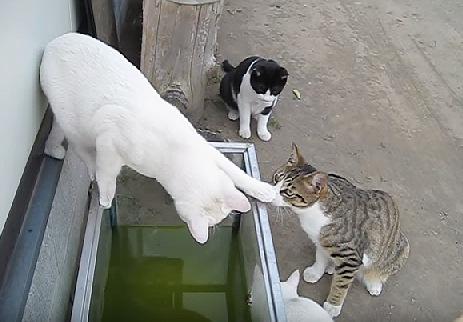 水槽の縁を移動する白猫