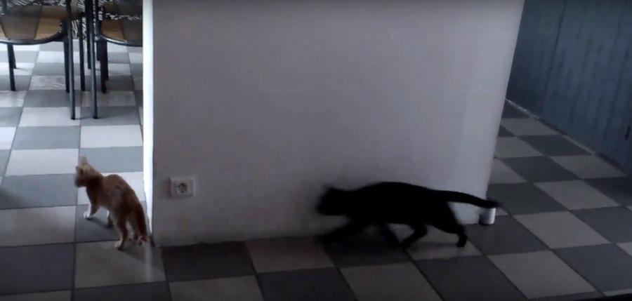 近づく黒猫