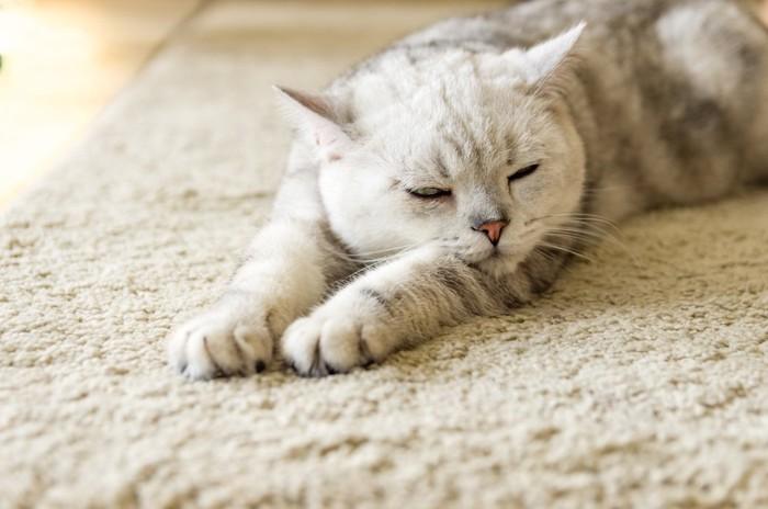 両手を伸ばしてふてくされて眠る猫