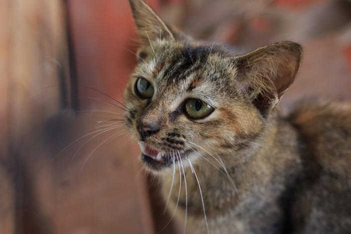 吐きそうで吐かない気持ち悪そうな表情の猫