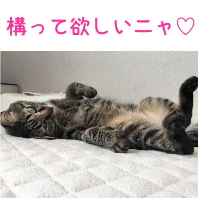 誘惑する猫