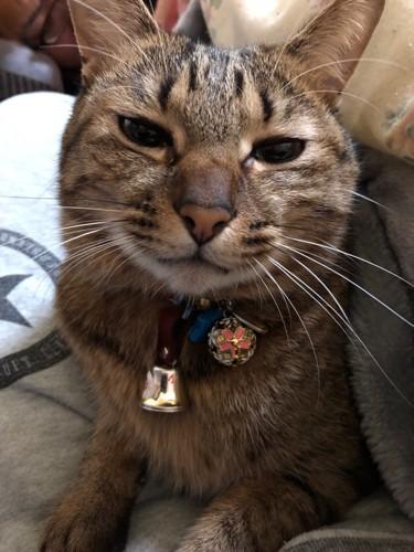 目を細めてまばたきする猫