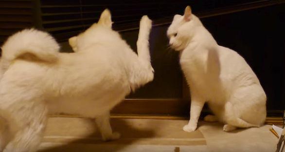 ハイタッチしていそうな犬と猫