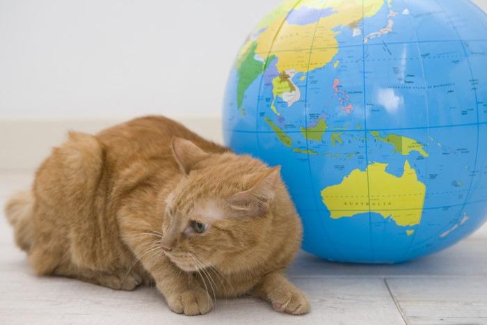 地球儀と猫