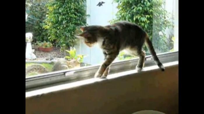 タジタジな猫