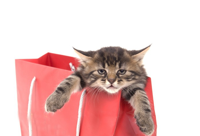紙袋から顔と前足を出す猫