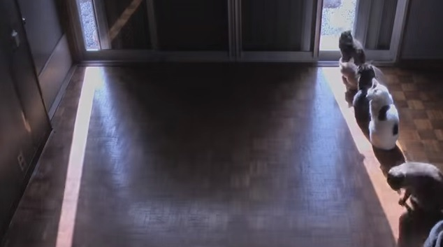 細く開けた窓と画面右端に並ぶ猫達