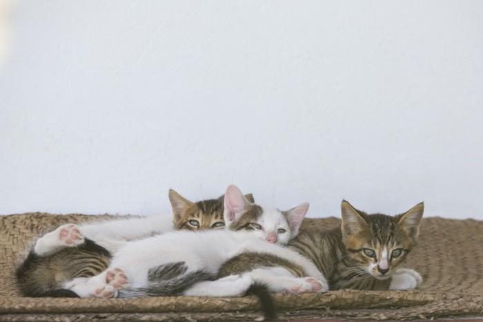 集まっている猫
