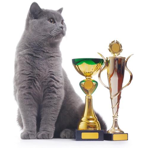 トロフィーの隣に座るグレーの猫