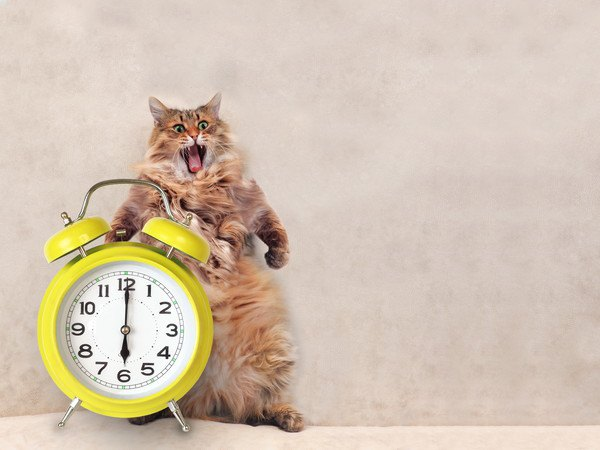 立つ猫と時計