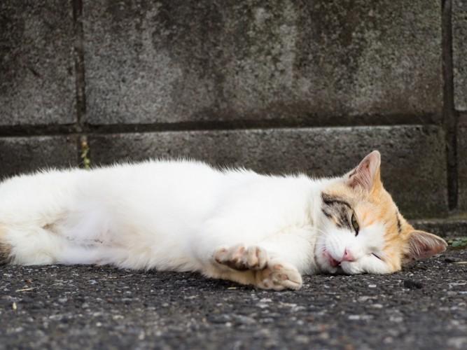 猫コロナウイルスの感染症状や予...
