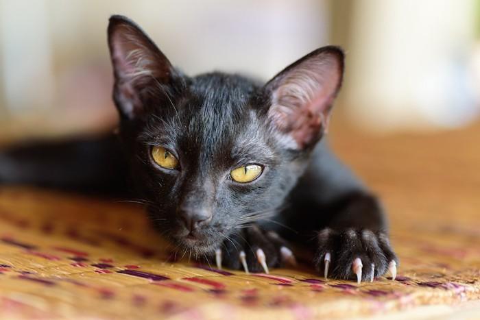 爪が鋭く伸びている黒猫