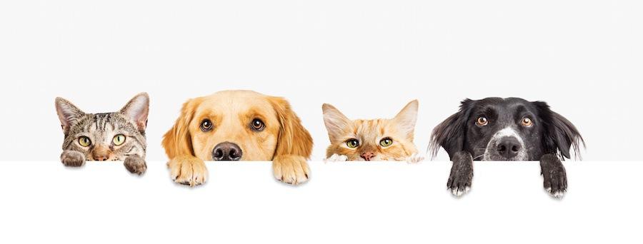 顔を出す犬と猫たち