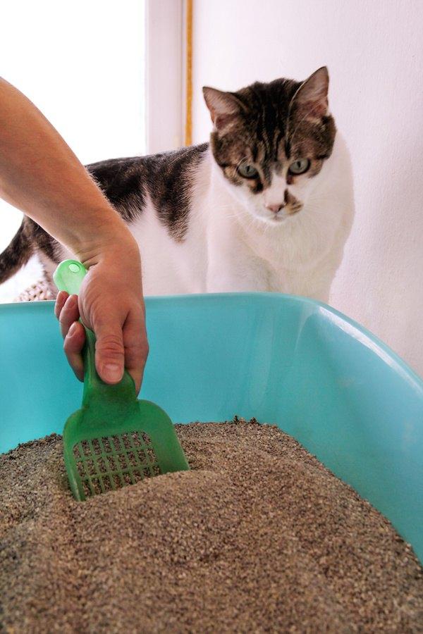 トイレ掃除をする人と見る猫