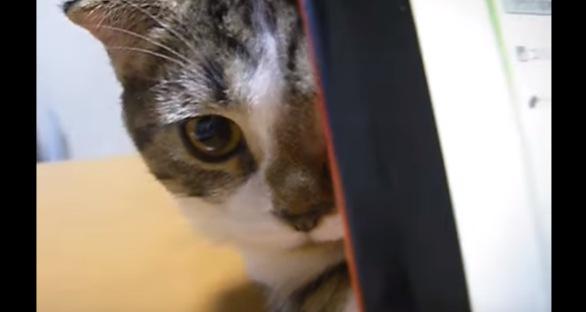 半分隠れた猫の顔