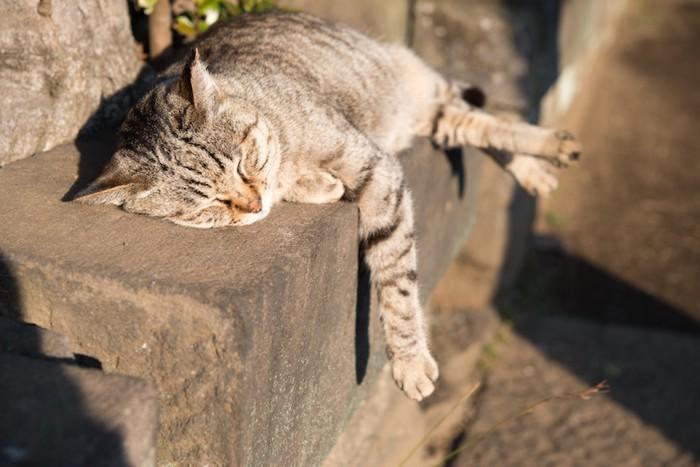 日向ぼっこしている野良猫