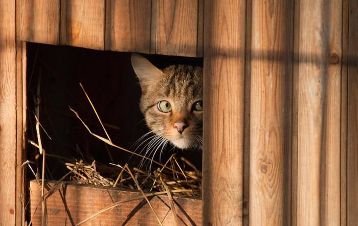 物陰からあたりを伺う猫