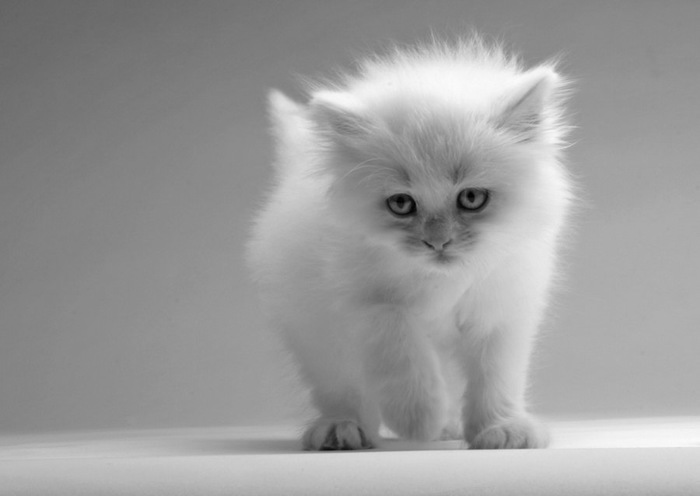 こちらに向かって歩く子猫