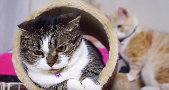 不思議な顔をする猫と背後の不穏な動きの猫