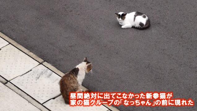 距離を取って座る2匹の猫
