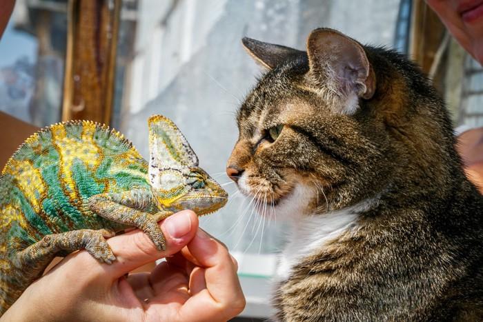 トカゲを食べる猫