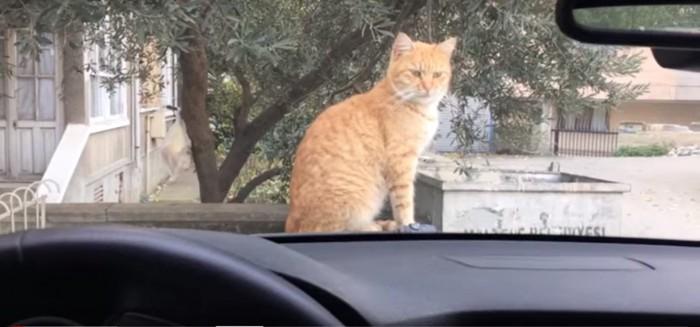 ボンネットに乗る猫