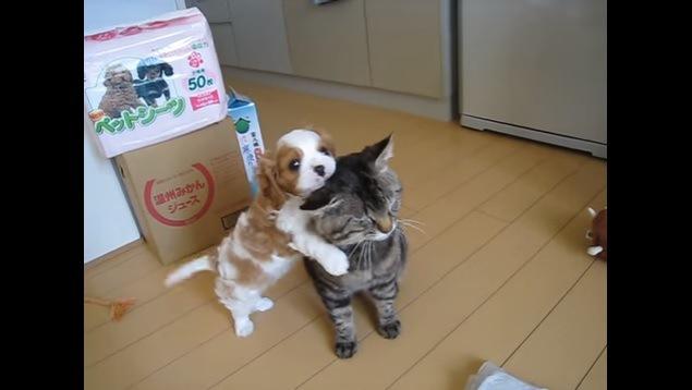 猫を抱きしめる犬