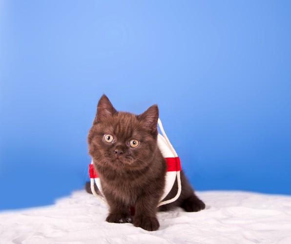 浮き輪をつけた子猫