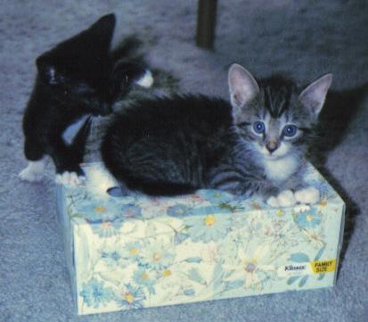 成長した猫たち