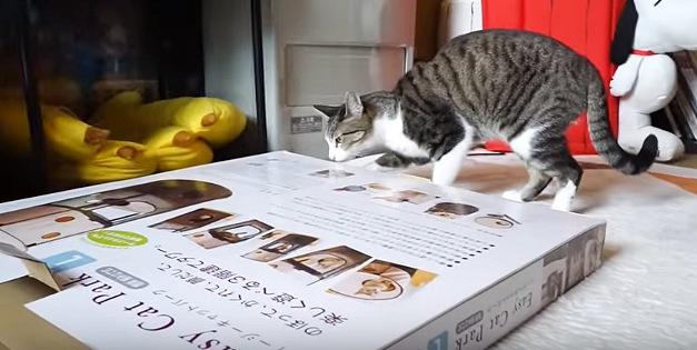 厚みの薄い箱が気になる猫