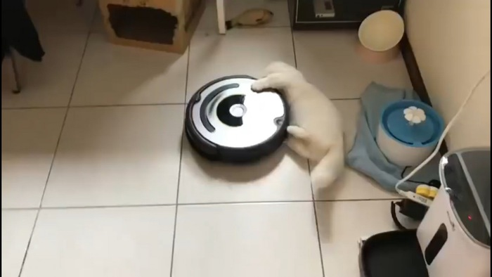 ルンバと猫