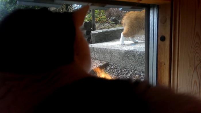 忍足のまま消える猫