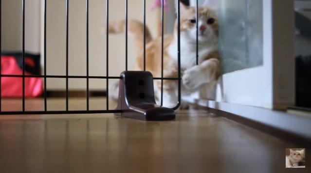 左脚で柵を引っ張る猫