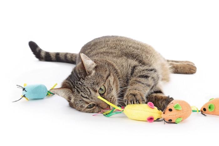 寝そべってネズミのおもちゃにじゃれる猫