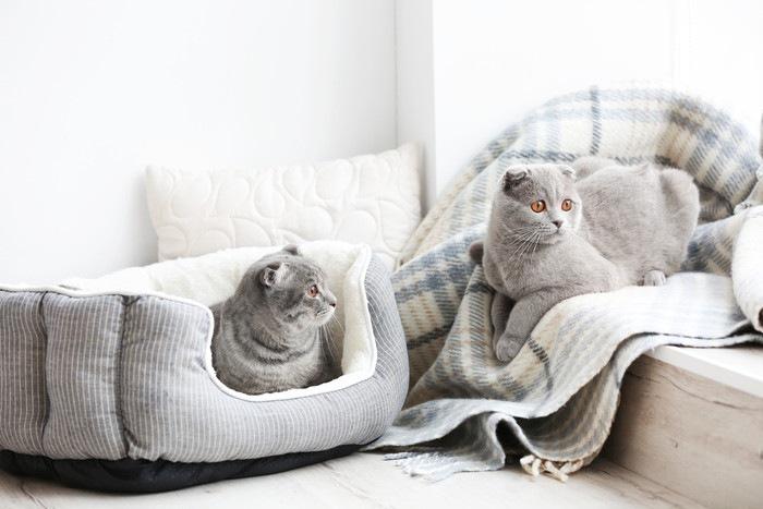 ベッドやブランケットの中にいる二匹の猫