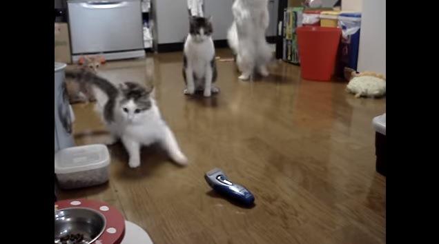 驚く猫たちと飛び上がる白猫