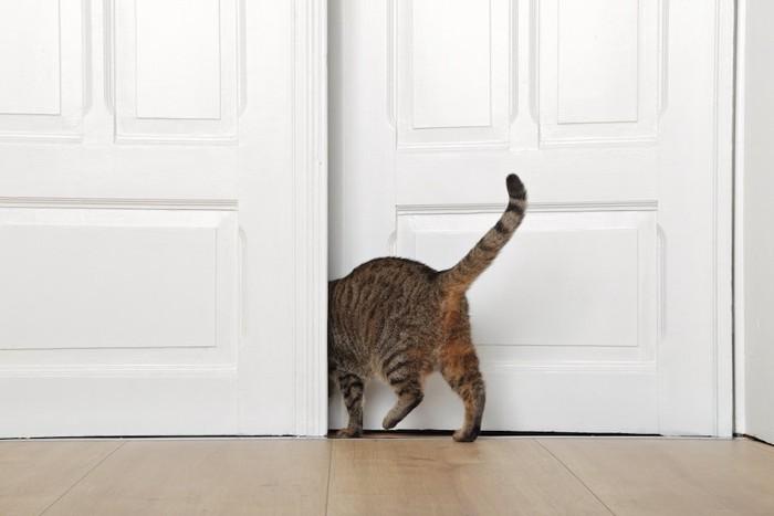 扉を開けて部屋から出て行く猫