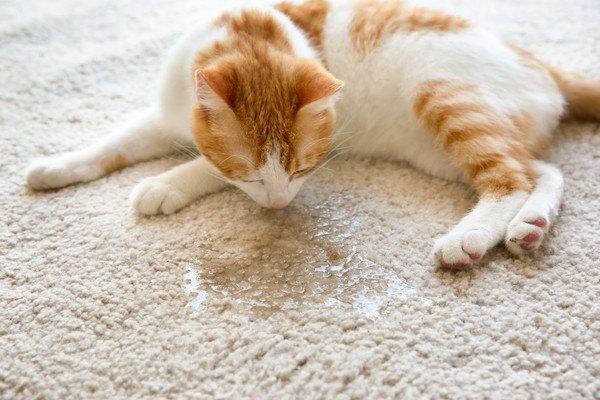 濡れたカーペットと猫