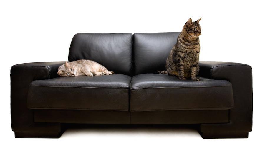 黒いソファに座る二匹の猫