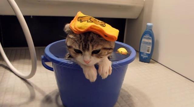 バケツ風呂に浸かる猫