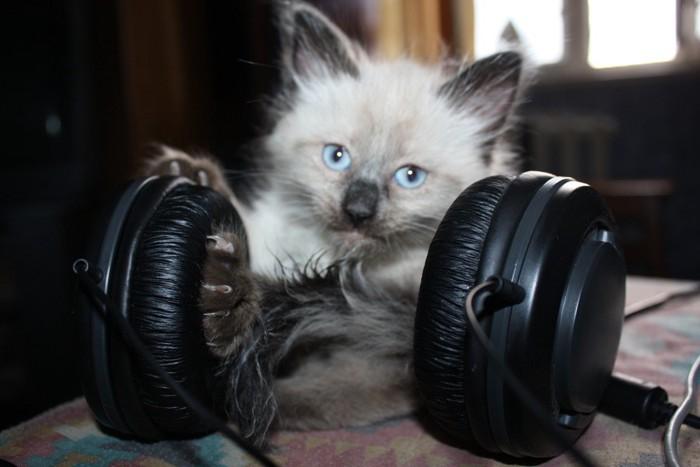 ヘッドフォンを持つ子猫