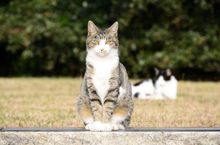 エジプト座りの猫の写真