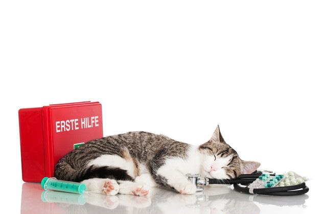 薬と寝ている猫