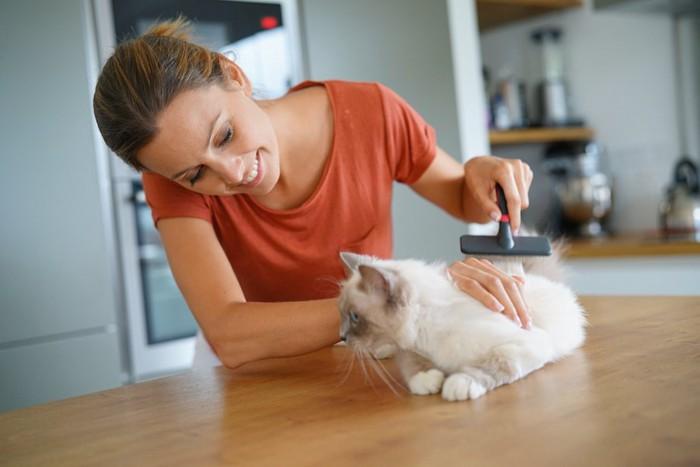 子猫をブラッシングしている女性